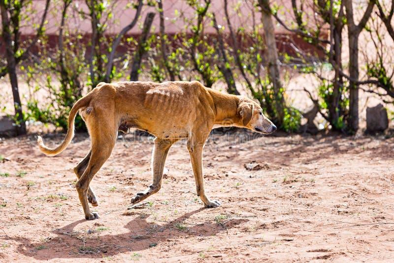 Svulten hund för grymhet royaltyfri fotografi