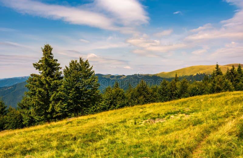 Svydovets土坎树木丛生的小山和草甸  免版税库存照片