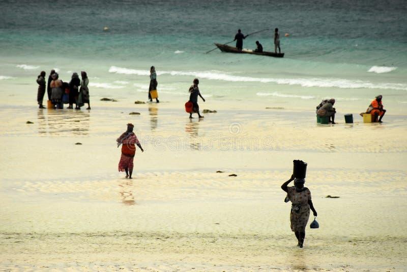 Swahili ladies, Zanzibar Island. Colourfully dressed Swahili ladies on Zanzibar beach after having shopped at fisher boats returning from deep sea royalty free stock image