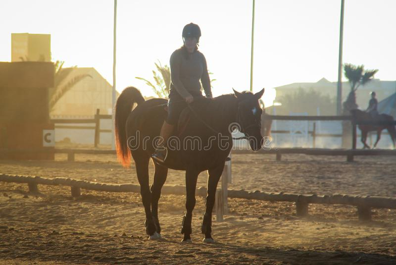 a girl involved in equestrian sports sits on horseback at sunset stock photos