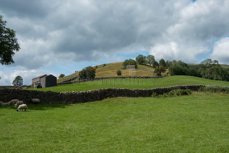 Swaledalelandbouwgrond stock afbeelding
