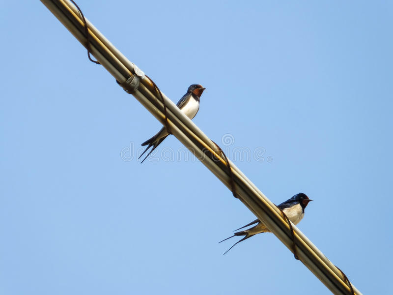 Download Swallow bird stock image. Image of backgrounds, swallow - 30767811