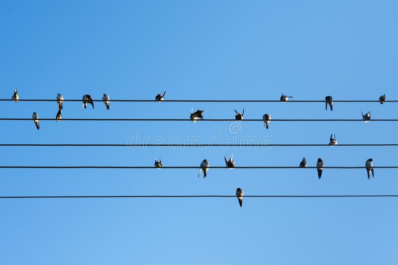 Swallow Birds Sitting On Wires Stock Image - Image of nature ...