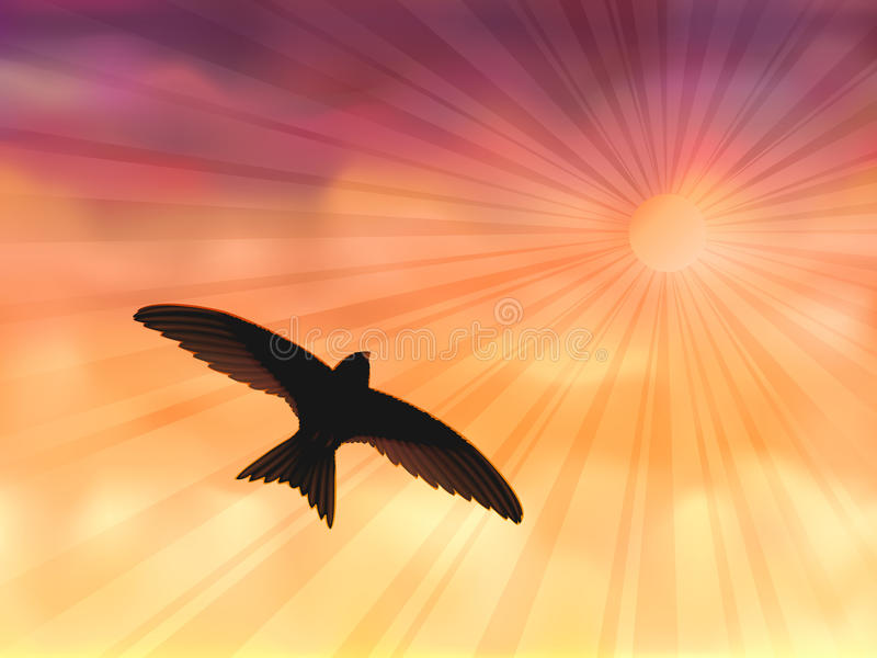 Swallow In The Evening Sky Stock Images