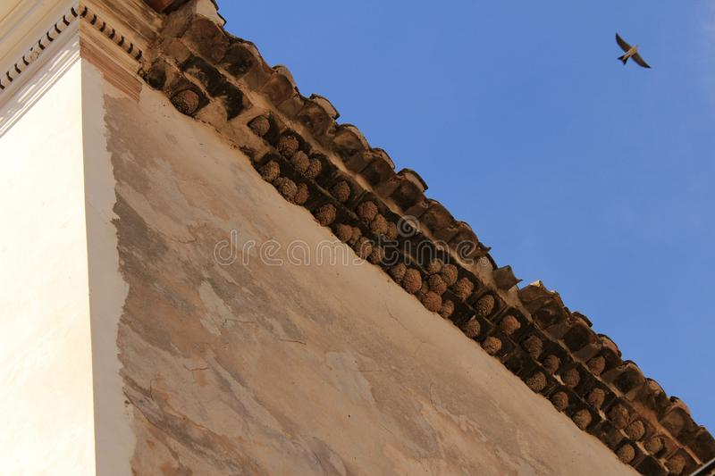 Swallow and nests on the facade of an old house stock photo