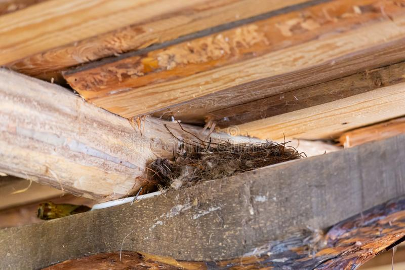 Swallow`s nest under the roof of a wooden house.  royalty free stock image