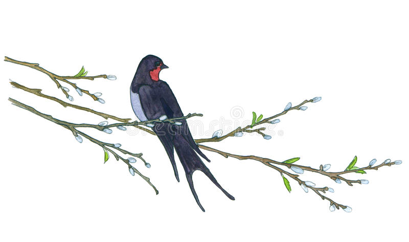 Swallow on willow tree. Hand drawn illustrations stock photo