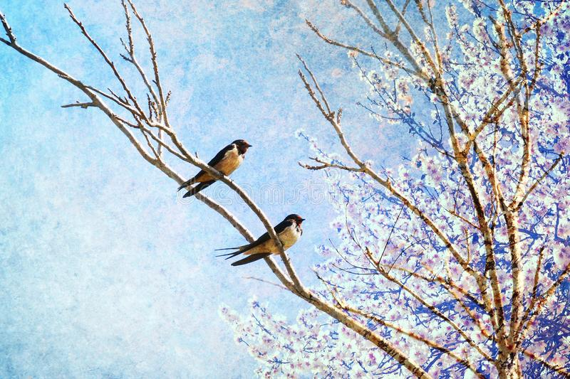 Swallows birds return home on Springtime. Spring nature awaking concept. royalty free stock photography