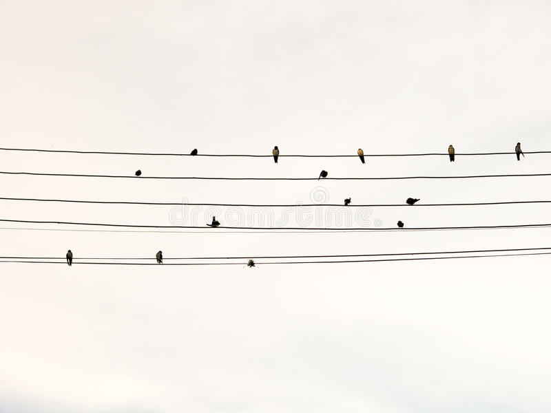 Swallows in electric wire. Likes musical score or guitar cords stock photo