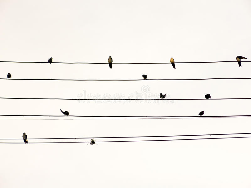 Swallows in electric wire likes musical score or guitar cords. Swallows in electric wire likes musical score or guitar cord royalty free stock images