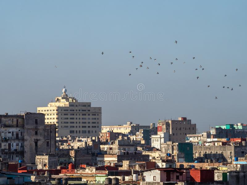 Swallows flocking over the city of Havana, cuba, in the evening light. Mumuration of swallows over the UNESCO city of Havana, with rooftops and evening sun on royalty free stock photos
