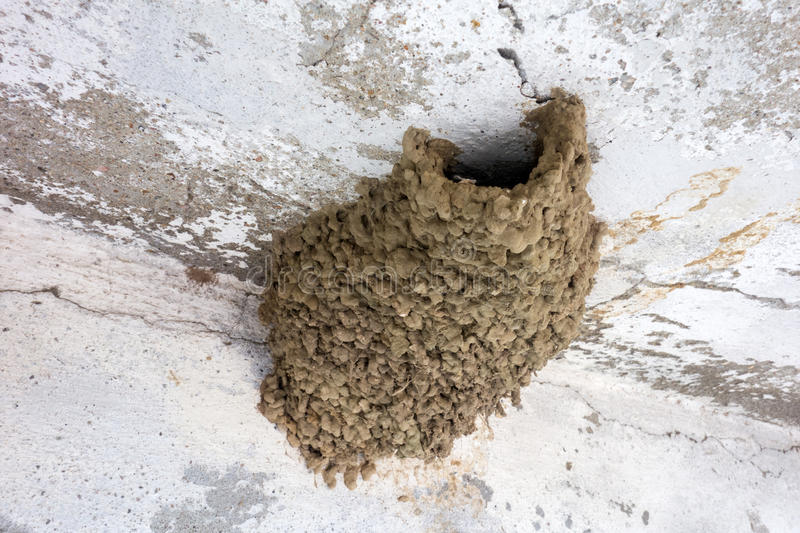 Swallows nest. Common house martin mud nest under the eave of house stock photo