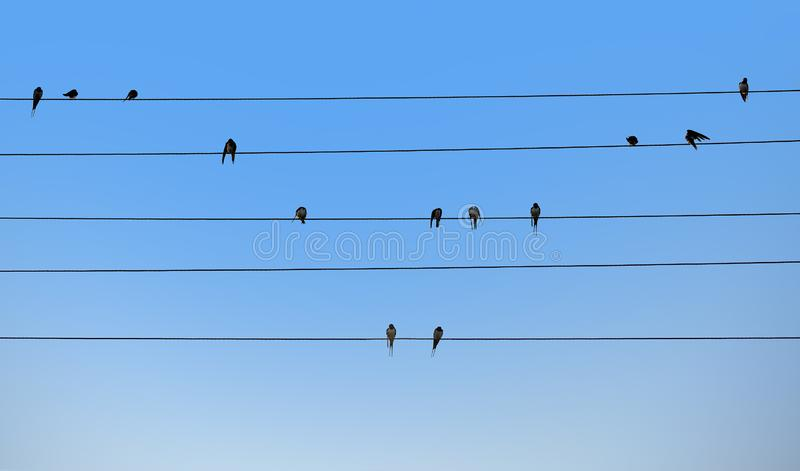 Swallows are sitting on electric wires. Bird notes. Natural music concept royalty free stock images