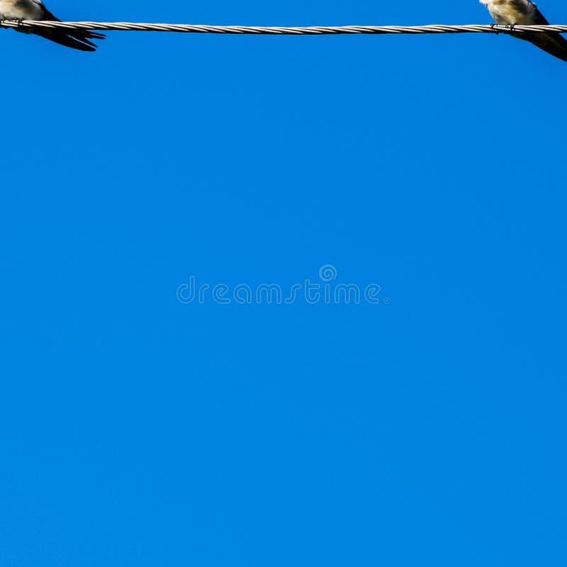Swallows sui collegare Sorsi contro il cielo blu Lo swallo fotografia stock libera da diritti