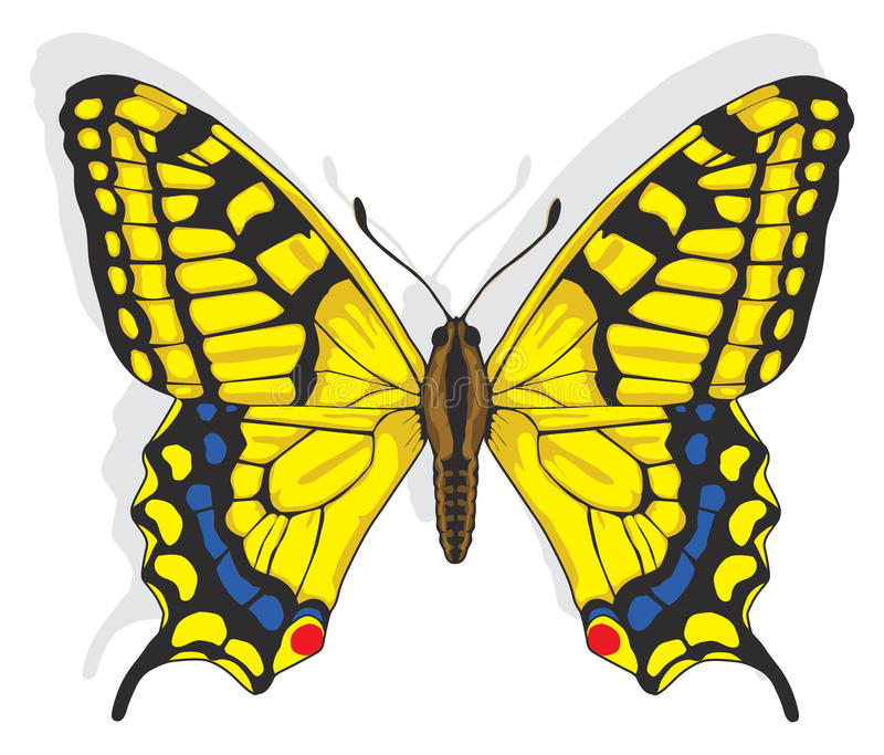 Swallowtail butterfly royalty free illustration