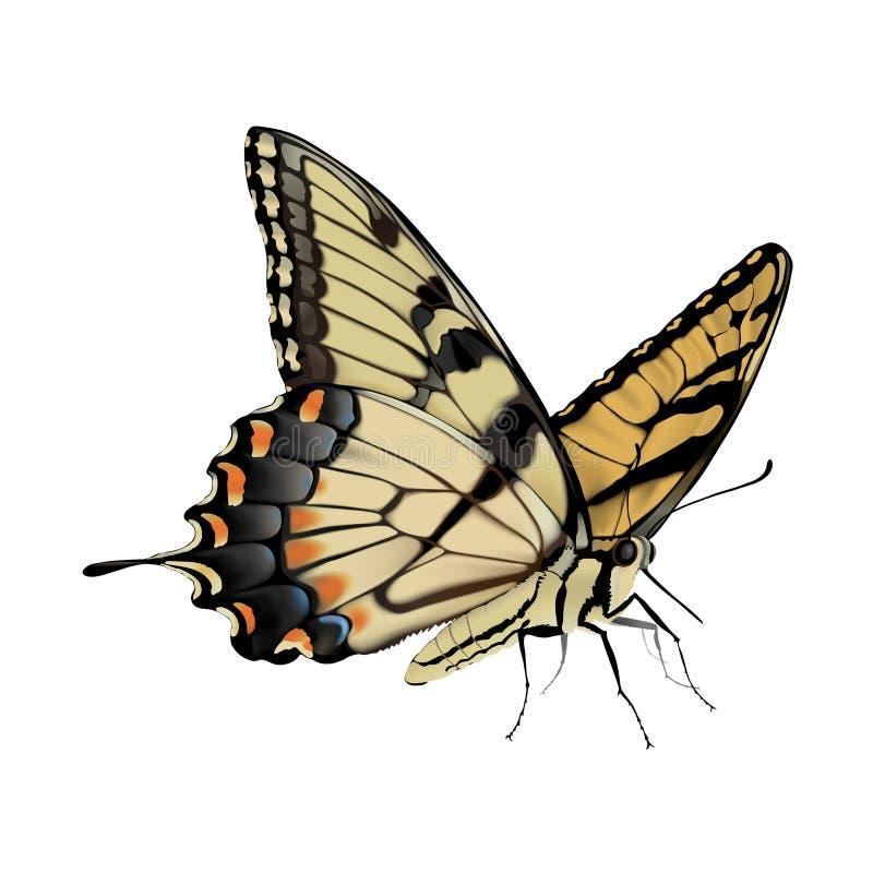 Swallowtail Butterfly - Papilio glaucus stock illustration