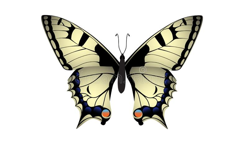 Swallowtail butterfly vector. Yellow swallowtail butterfly vector on white background vector illustration