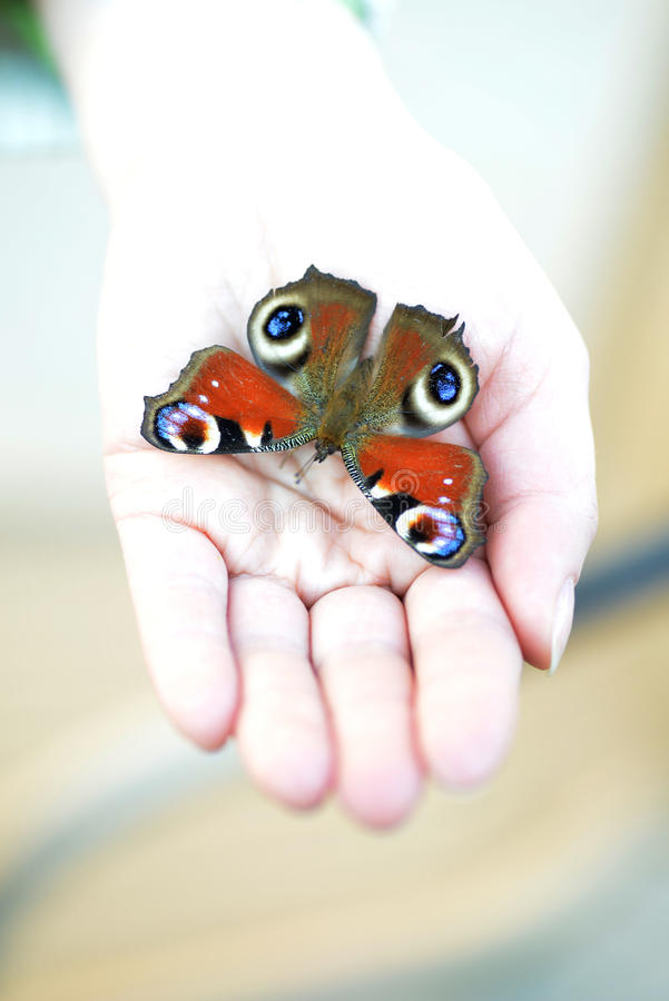 Swallowtail fjäril arkivfoto