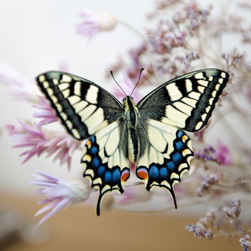 Swallowtail fjäril på bukett arkivbild