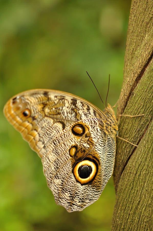 Download Swallowtail on liana stock photo. Image of small, savage - 19433094
