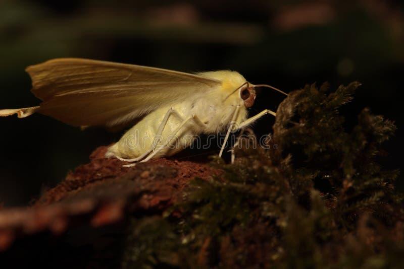 Swallowtailed mal. royaltyfria foton