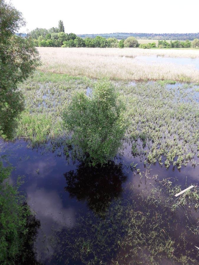 Swamp湖 免版税图库摄影