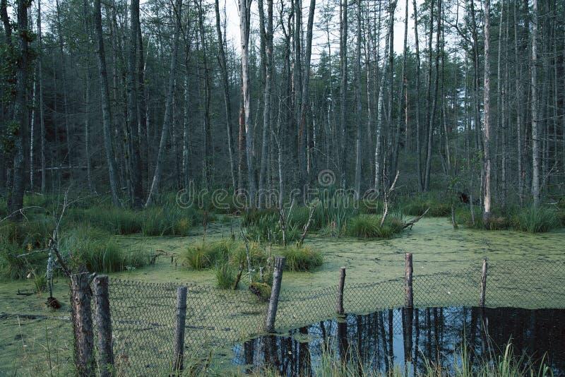 swamp foto de stock royalty free