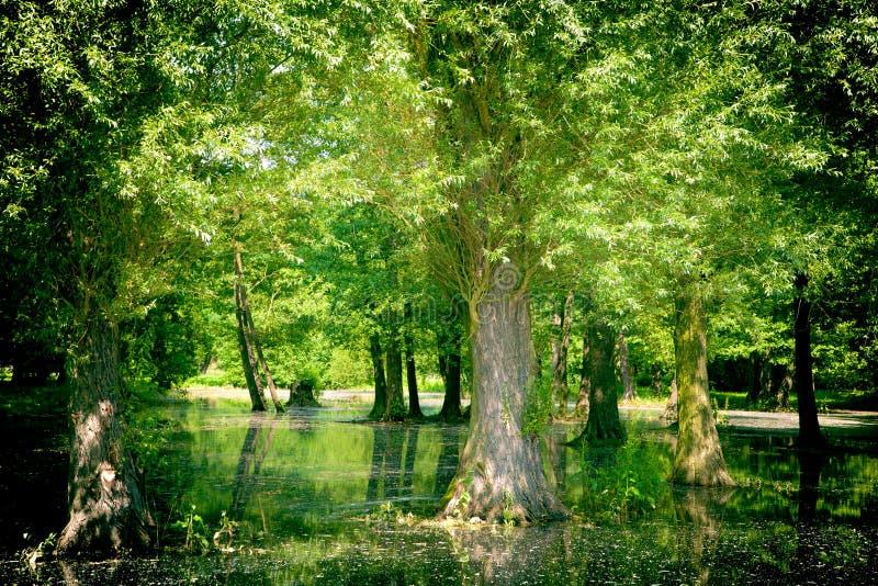 Swamp stock image