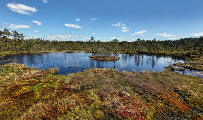 Download Swamp stock photo. Image of swamp, sweden, summer, water - 25396508