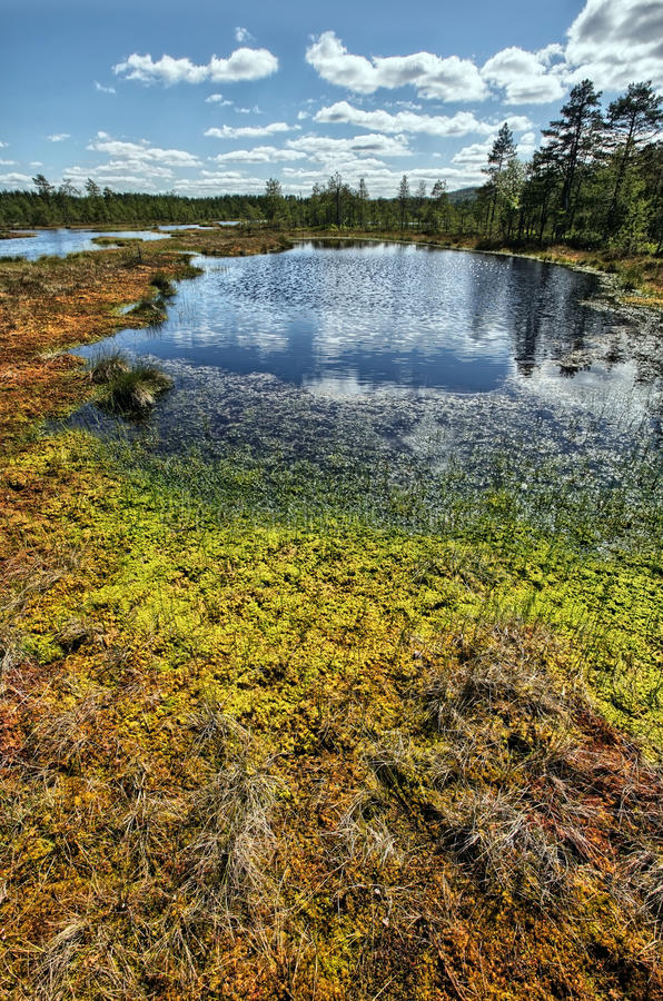 Swamp Stock Images