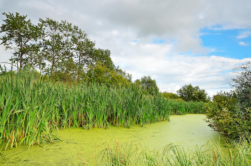 Download The swamp stock image. Image of environment, landscape - 26802241