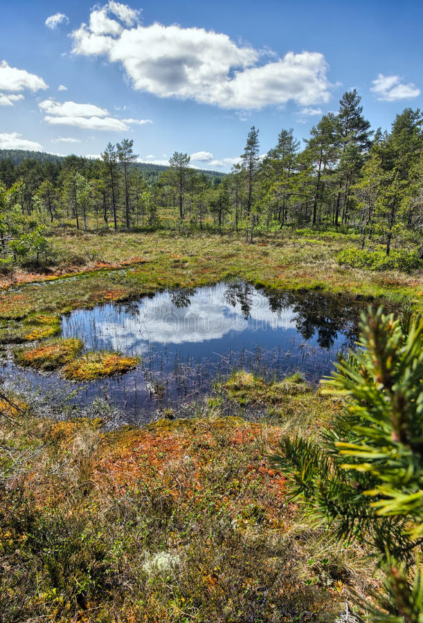 Download Swamp stock photo. Image of flora, grass, clouds, swamp - 27854854