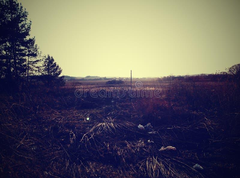 swamp fotografia de stock
