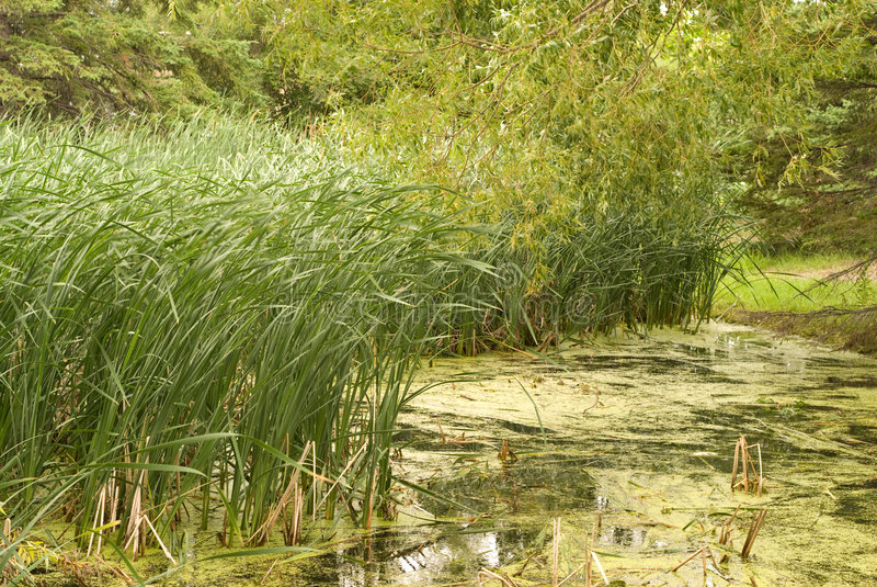 Download Swamp Stock Images - Image: 5869194