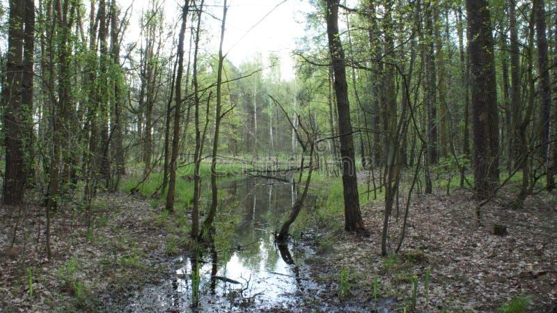 swamp royaltyfria bilder