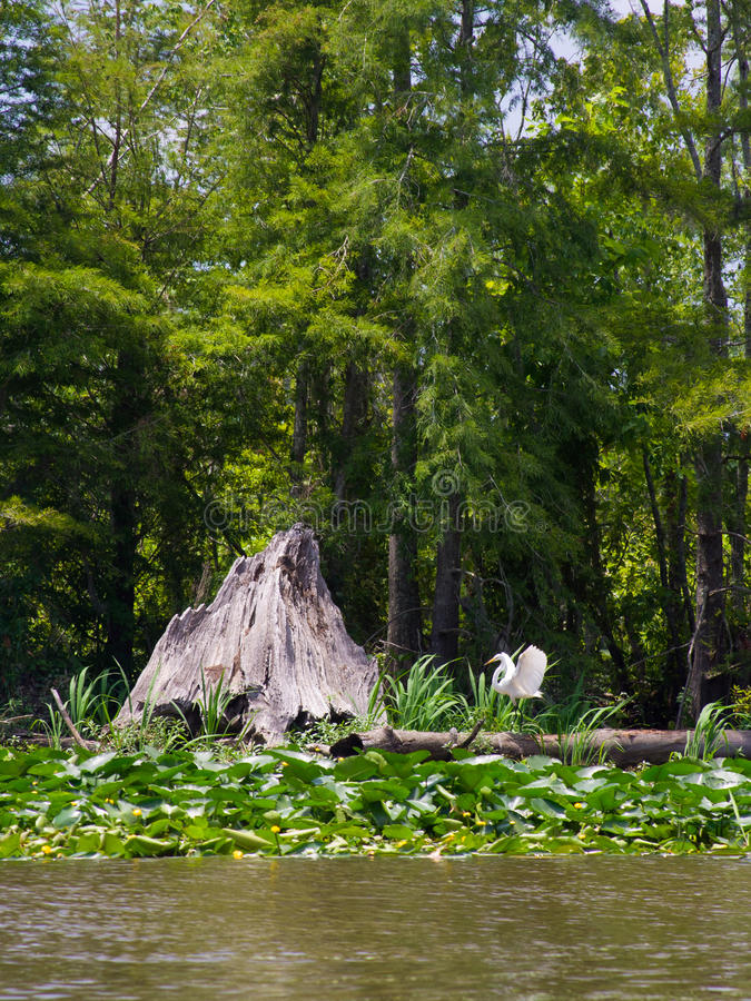 Swamp or bayou stock photos