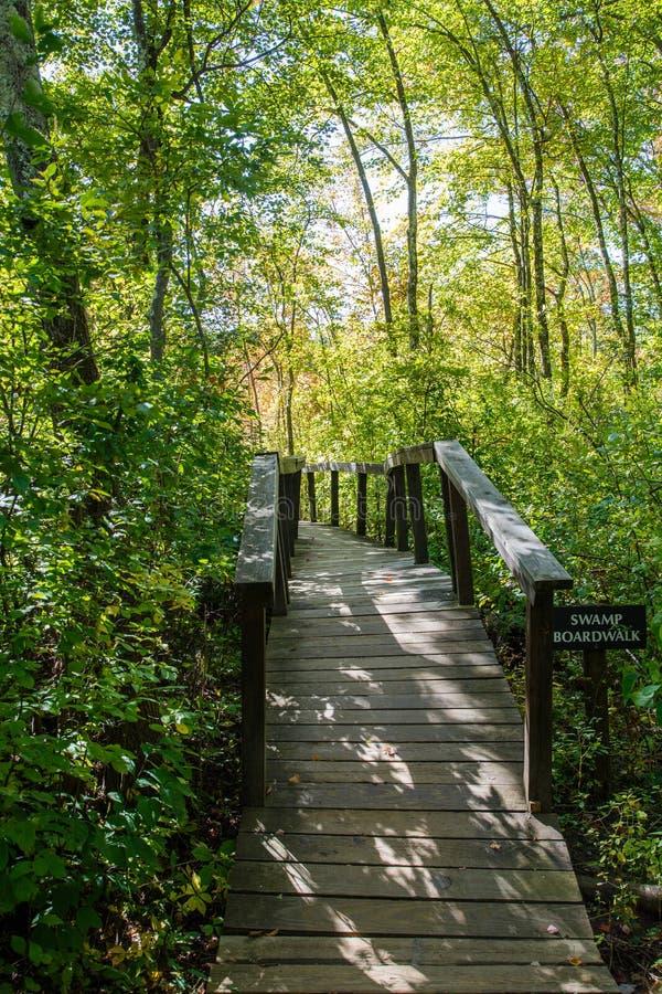 Swamp boardwalk royalty free stock images