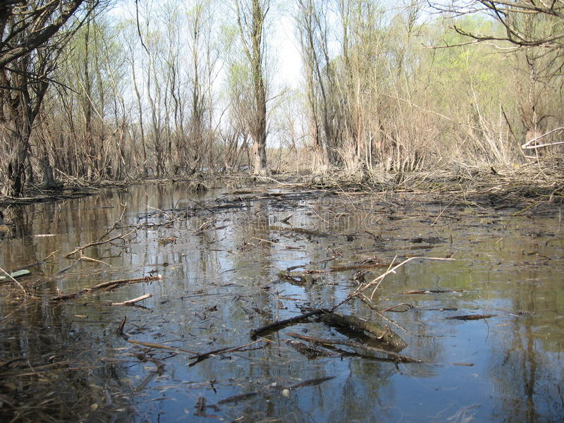 Swamp. Cowered water and branch bough tree stock photos