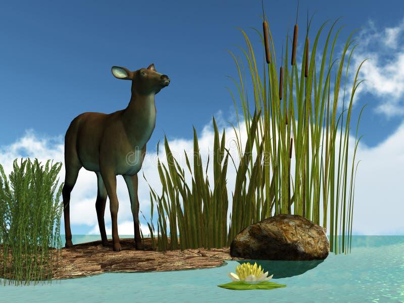 Download Swamp Deer stock illustration. Image of deer, flower - 15554964