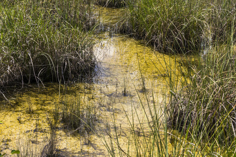 Swamp in Everglades, Florida. Big Swamp in Everglades National Park, Florida stock photos