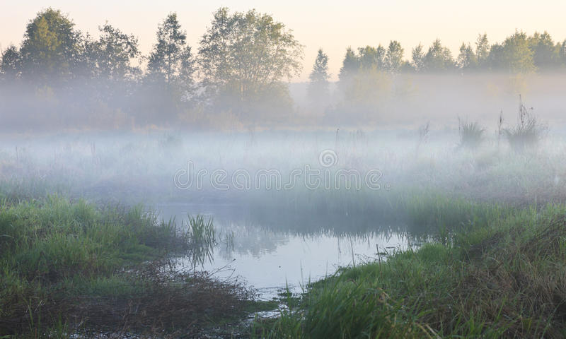 Swamp in the fog royalty free stock images