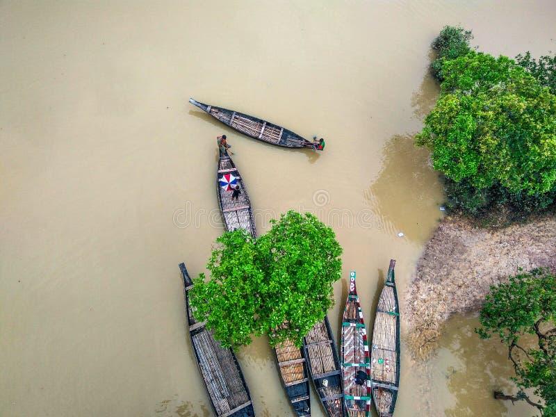 Swamp forest Bangladesh royalty free stock image