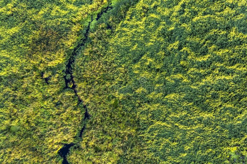 Swamp in the forest view from drone. Swampy landscape. View of an impassable swamp from height. Aerial photography Wild forest. Swamp in the forest view from stock photography