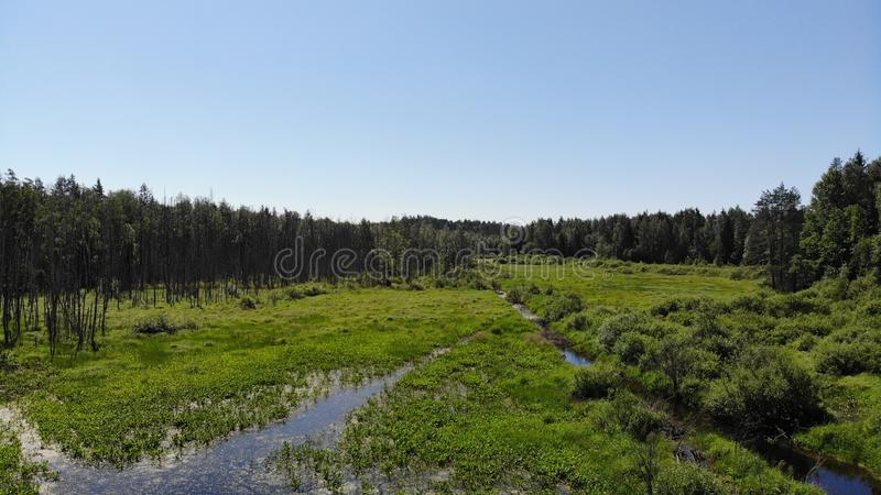 Swamp in the forest view from drone. Swampy landscape. View of an impassable swamp from a height. Aerial photography Wild forest l. Andscape royalty free stock image