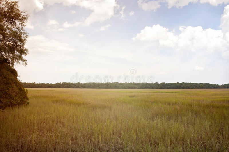 Beautiful swamp land in GA royalty free stock photos