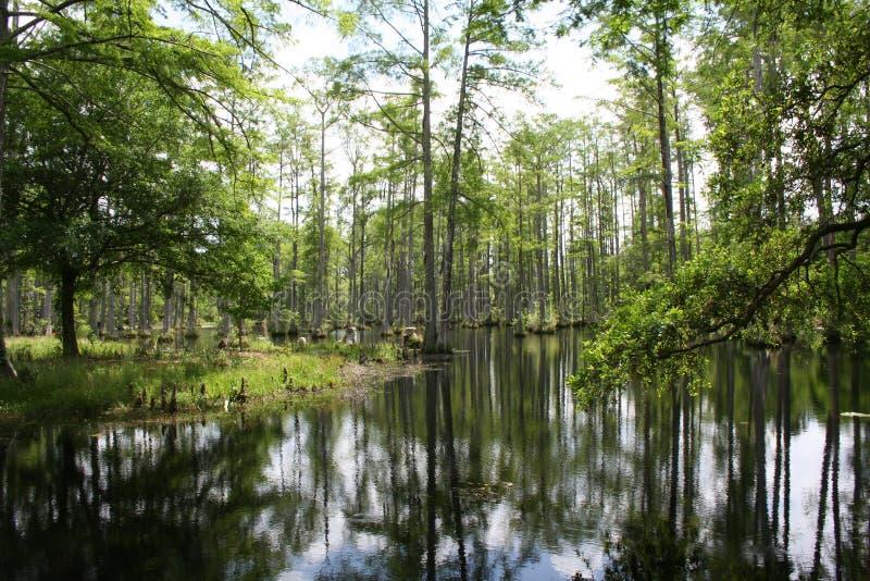 Swamp lands in South Carolina stock images