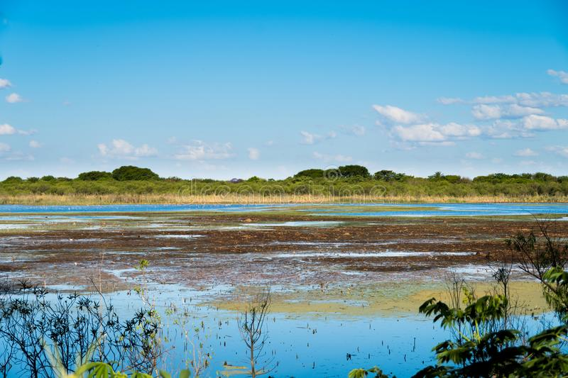 Swamp landscape in Puerto Madero, nature and water.  stock photos