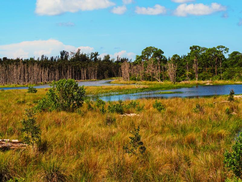 Swamp landscape. And view over lake in Florida stock photography