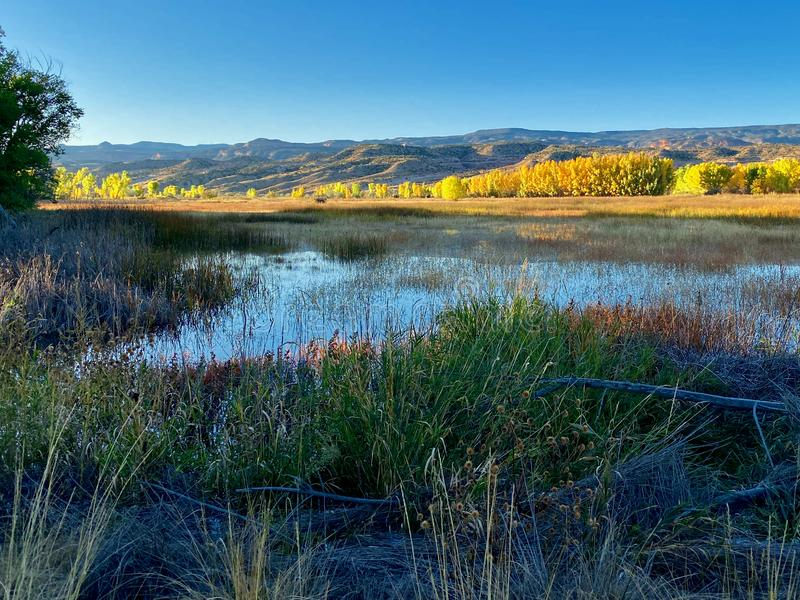 Swamp in Mesa County. Mesa County, in Western Colorado, includes the cities of Grand Junction, Fruita, and Palisade.  Colorado National Monument is located there royalty free stock image