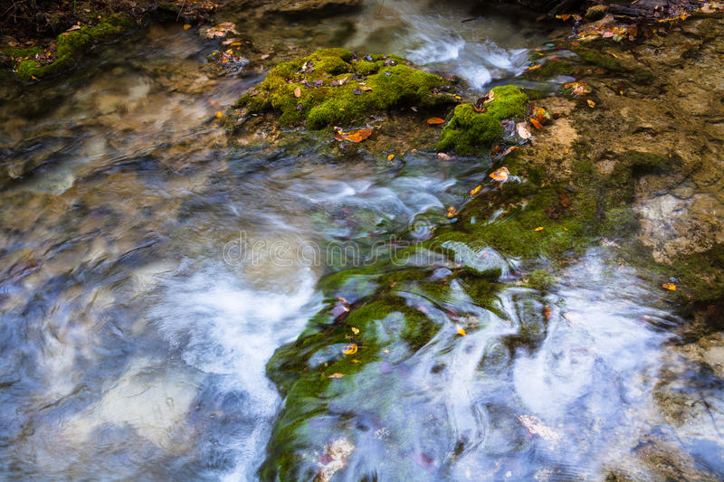 Swamp moss. Growth in the stream of moss on the rocks stock photography